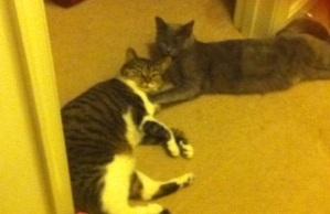 Kitties cropped